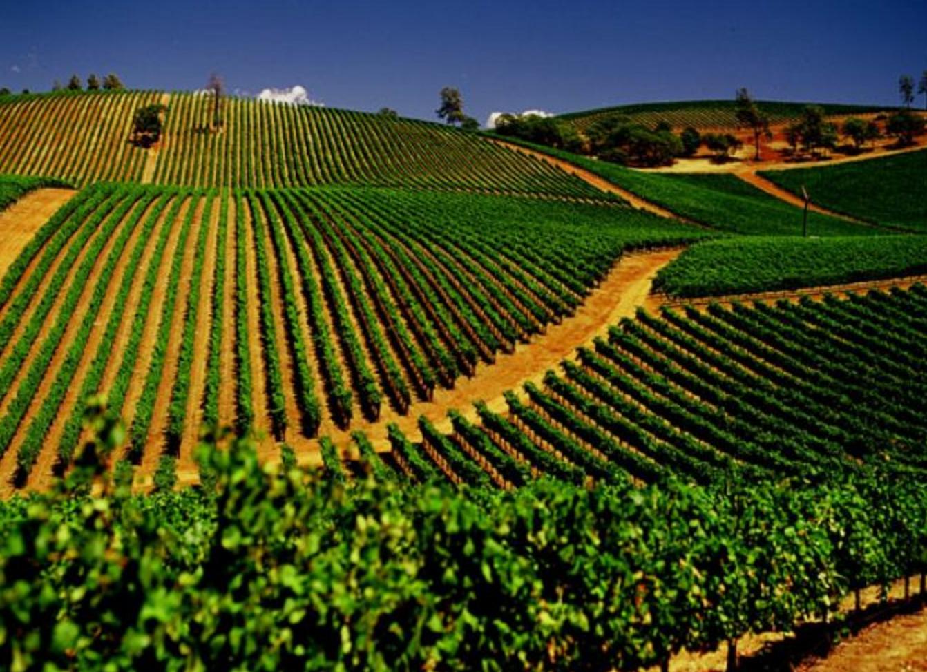 Cali Wine Tour