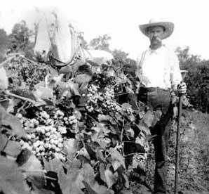 Early Wine history
